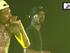 PUSH | Wiz Khalifa | Black and Yellow