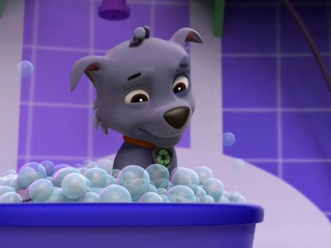 ¡El baño de Rocky!