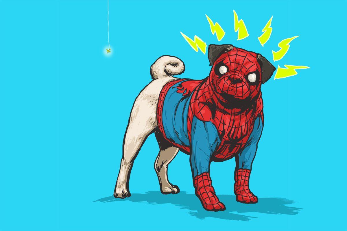 spiderpug2