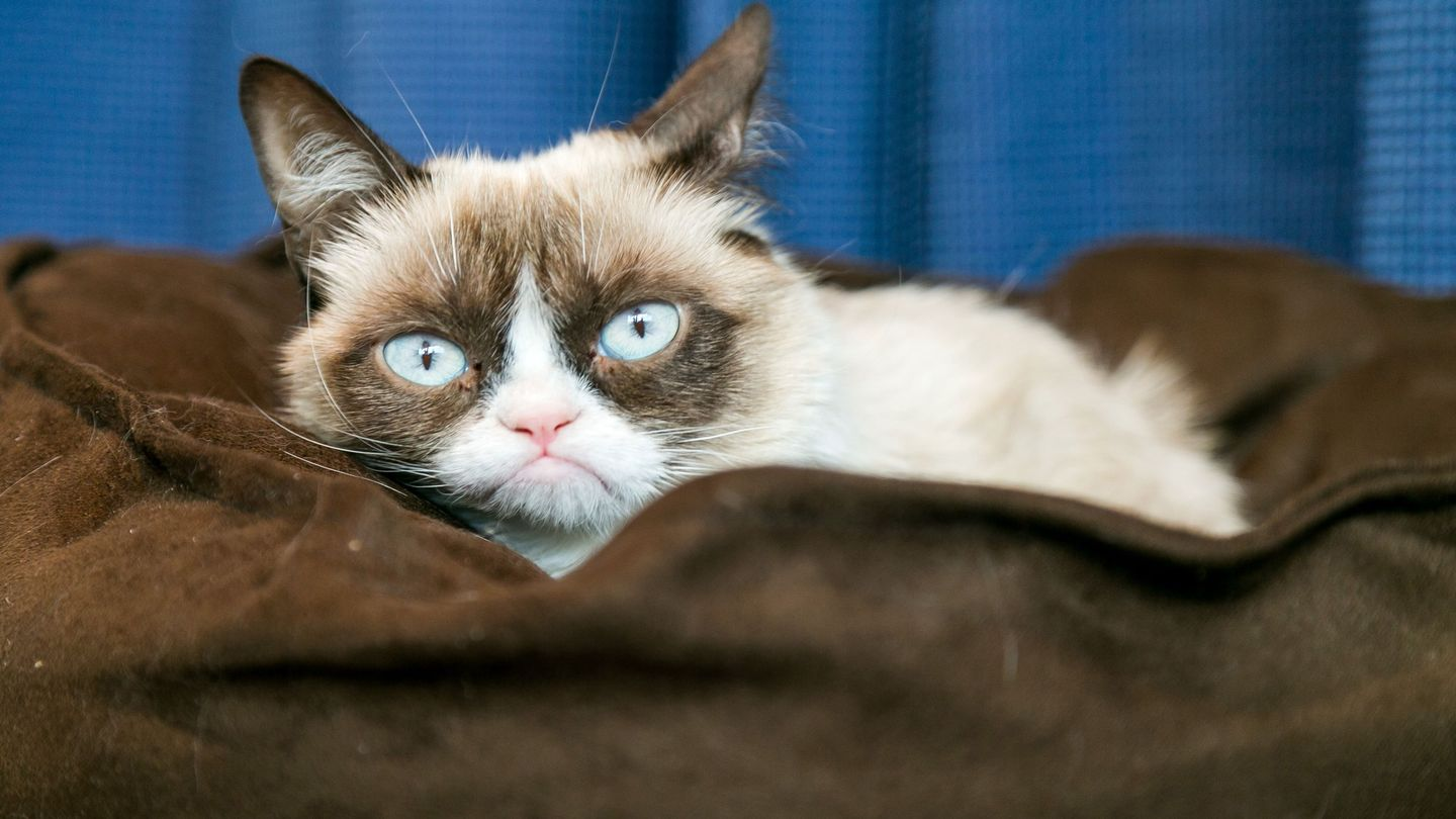 Grumpy Cat Is Getting Her Own Wax Figure - And Of Course She Hates It