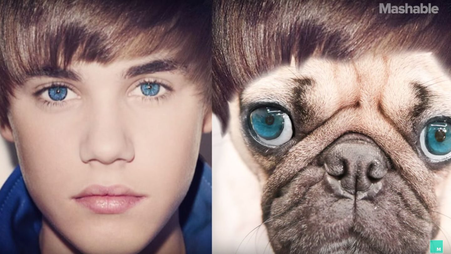Justin Bieber Might Cry Again When He Sees This Pug's Tribute To His Most Iconic Photos