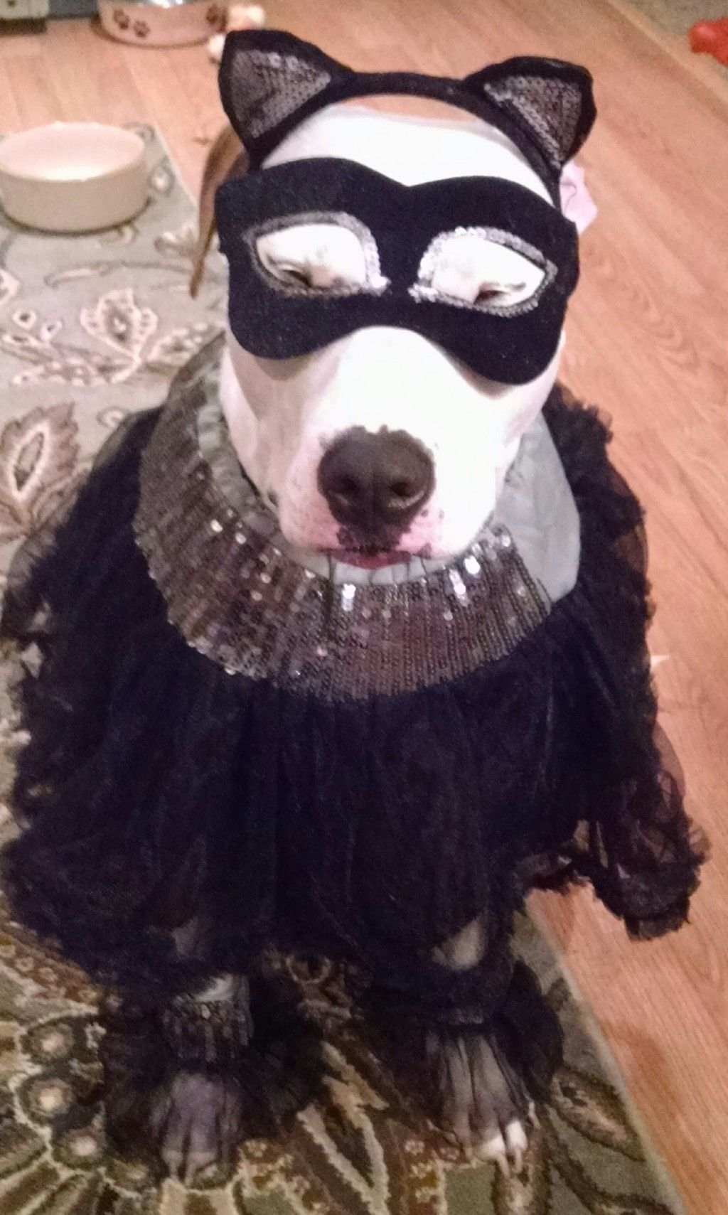 More like  letu0027s go ahead and torture the cat  woman emIright? & 19 Pets In Movie Halloween Costumes That Will Kill You With Adorable ...