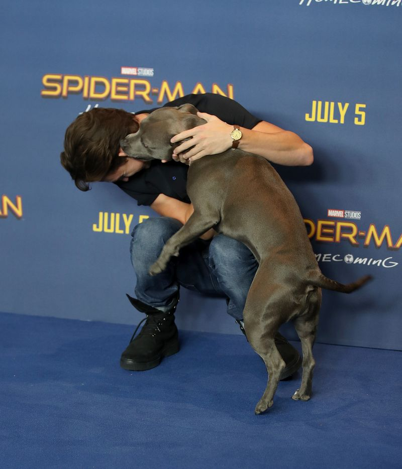 Tom Holland And His Pu...
